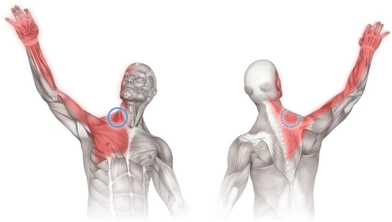 Massage therapy for the scalene muscles diagram showing areas of pain referred from the scalene muscle group this diagram shows the ccuart Image collections