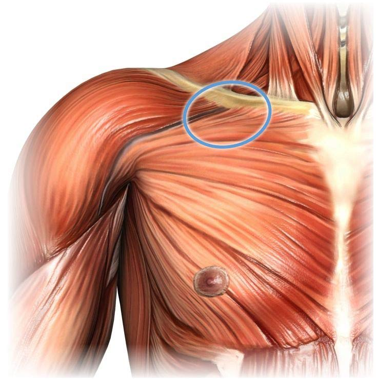 massage therapy for pectoralis major