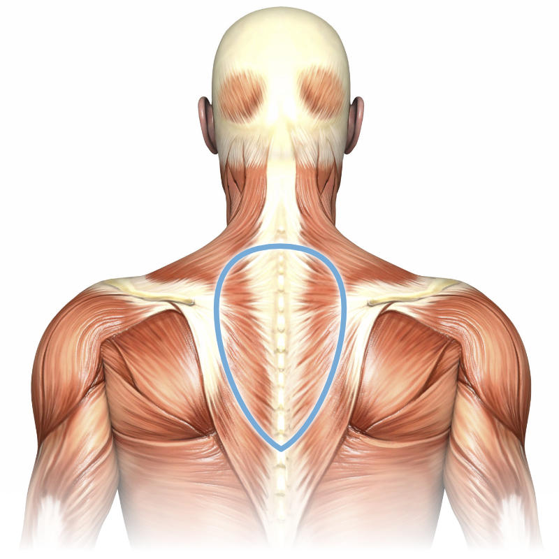 Common Neck And Back Muscles Diagram Pain Block And Schematic